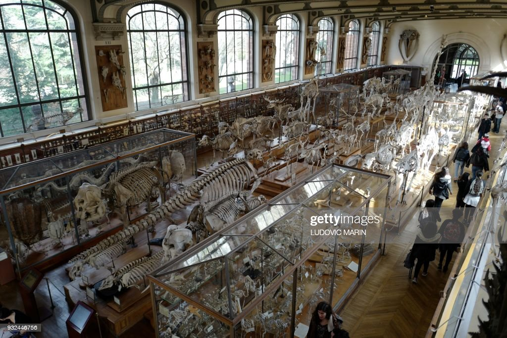 People visit the palaeontology and comparative anatomy gallery at ...