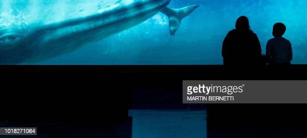 """People visit the """"Whales, voices of the sea of Chile"""" exhibition at the La Moneda Cultural Centre Museum in Santiago, on August 14, 2018. - The..."""