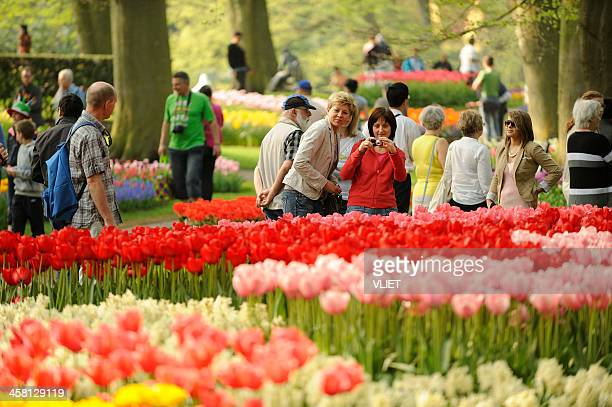 people visiting flower park keukenhof in the netherlands - keukenhof gardens stock pictures, royalty-free photos & images