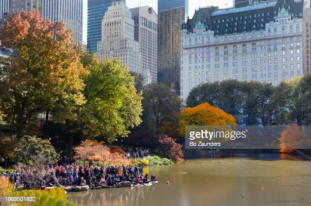 people waiting for a Mandarin duck to show up in the Pond, in the southeast corner of Central Paek, NYC.
