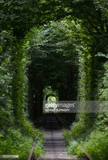 People walk along former railway tracks surrounded by arches of intertwined trees in the socalled 'Tunnel of Love' near the Ukrainian village of...