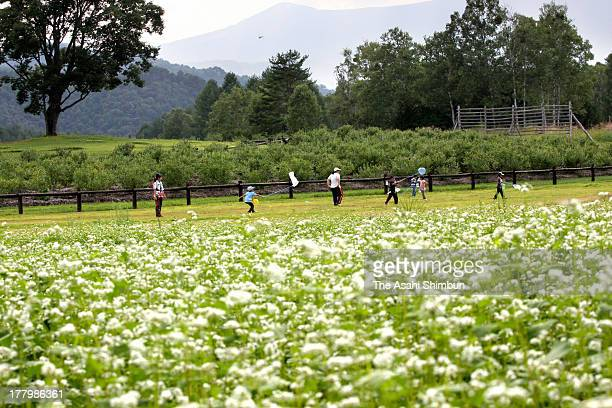 People walk among the fully bloomed Buckwheat at Kaida Highland on August 19 2013 in Kiso Nagano Japan