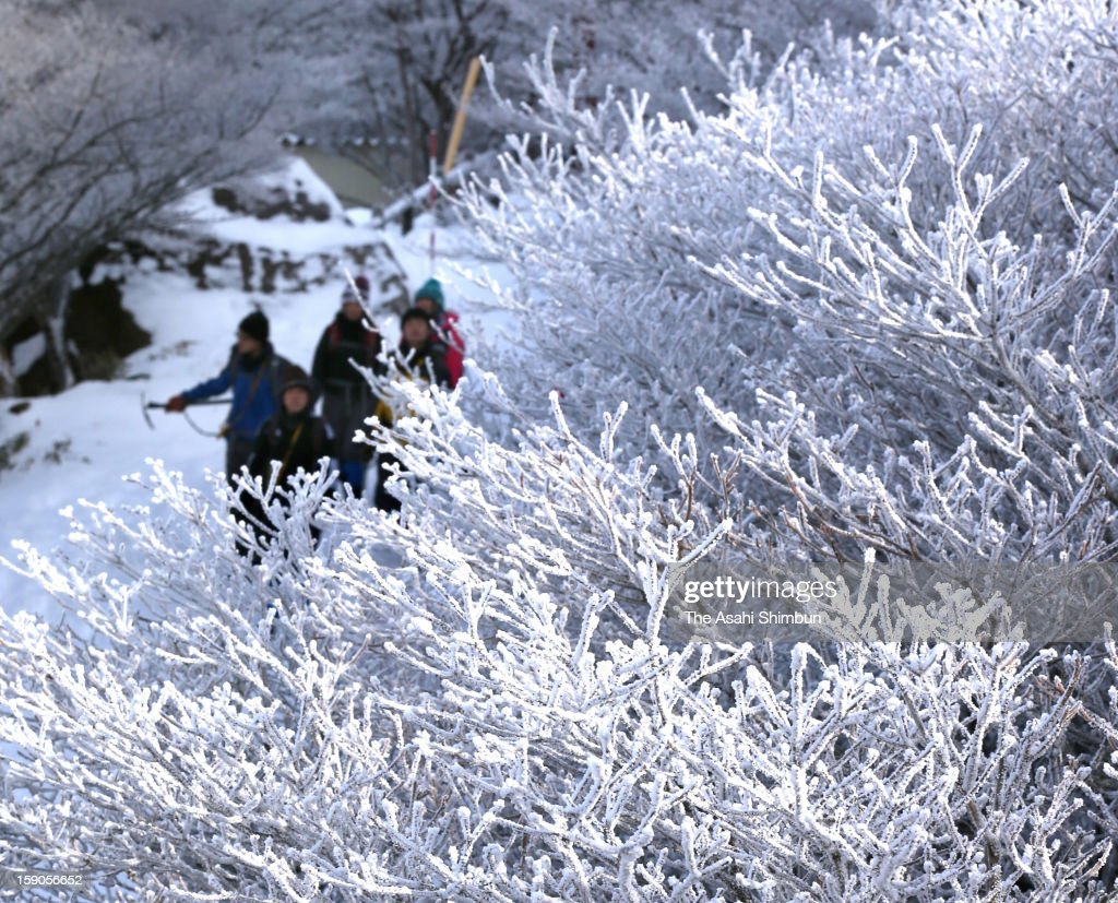 People walk among winter trees with soft rime close to the mountaintop of Gozaishodake on January 5, 2013 in Komono, Mie, Japan.