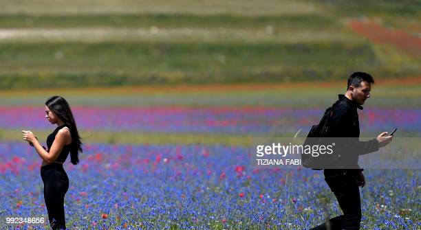 People walk amongst blooming poppies flowers near Castelluccio a small village in central Italys Umbria region on July 5 2018