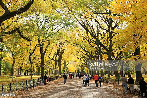 People walk down under the autumn color trees.