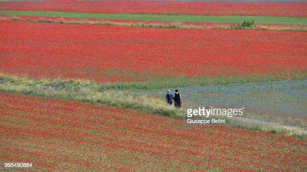 People walk in the fields during the annual blossom in Castelluccio on July 10, 2018 in Castelluccio di Norcia near Perugia, Italy.