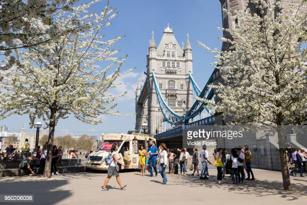 People walk in the sunshine next to blossom trees in full bloom on the South Bank next to Tower Bridge during hot and sunny weather on April 20 2018...