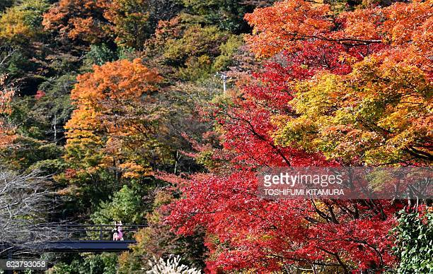 People walk on a bridge past trees with leaves that have changed their colour in autumn in Hakone town Kanagawa prefecture some 100 kilometres west...
