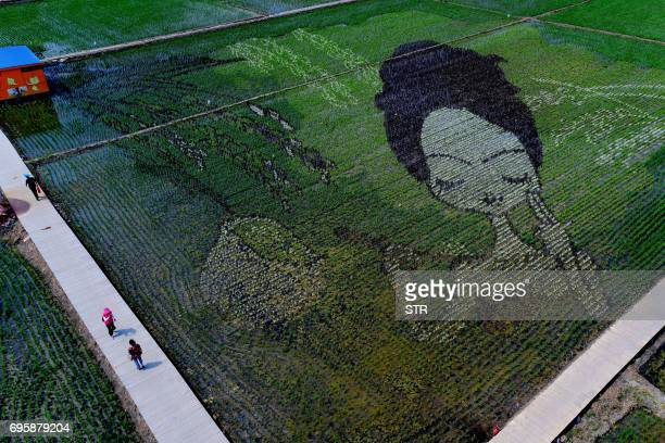 People walk past a design created using different varieties of rice in a paddy in Shenyang in China's northeast Liaoning province on June 14 2017...