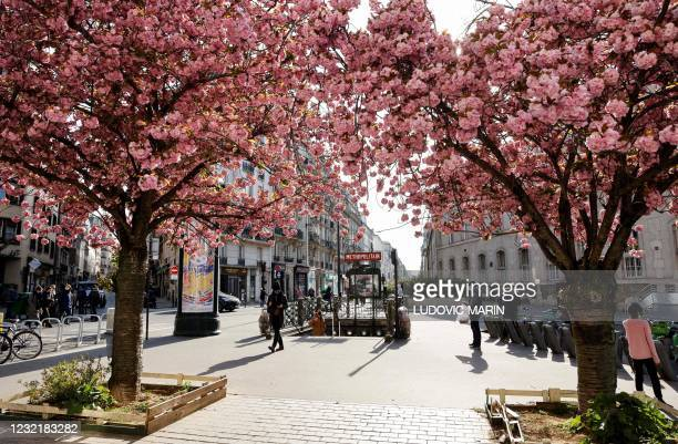 People walk past cherry blossom trees and a metro station, on a Spring day, on April 8 in Paris.