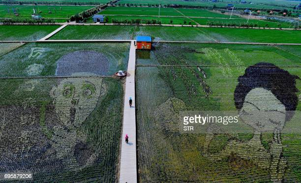 People walk past designs created using different varieties of rice in a paddy in Shenyang in China's northeast Liaoning province on June 14 2017...