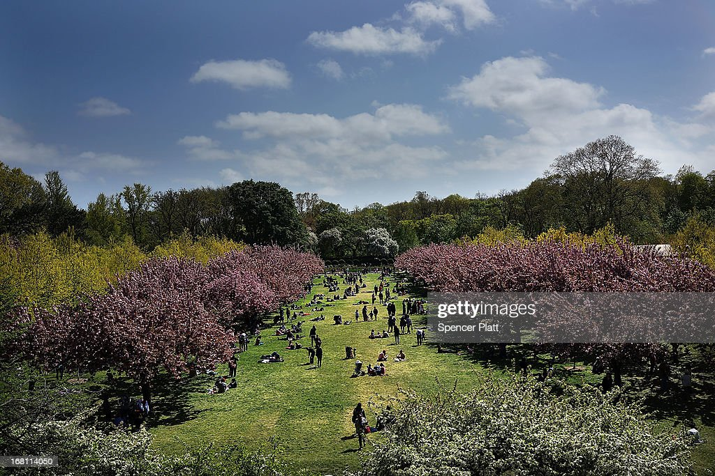 People walk through cherry blossom trees at the Brooklyn Botanic Garden on May 5, 2013 in New York City. The botanical garden, which sits on 52-acres, features numerous gardens and a conservatory. The Brooklyn Botanical Garden is famous for their cherry blossoms, which typically bloom at the end of April and are a centerpiece of the Garden's annual cherry blossom festival which attracts thousands of visitors.