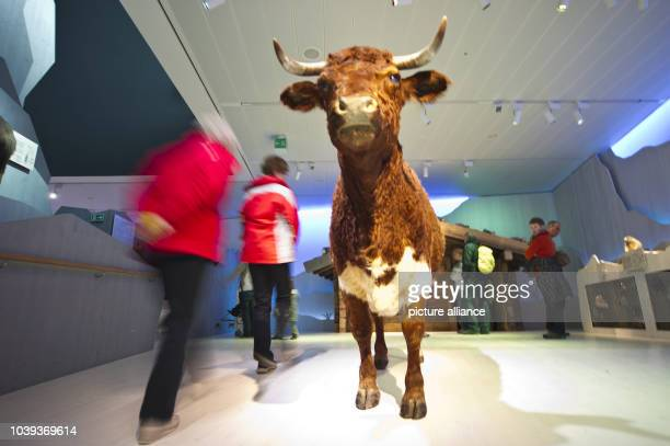 People walk through the 'Haus der Berge' museum of the mountains during the opening ceremony in Berchtesgaden Germany 24 May 2013 The education and...