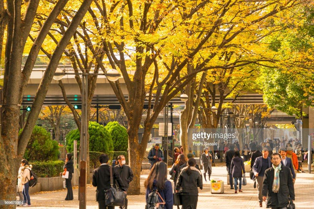 People walk through under the line of autumn leaves trees at Shinjuku Subcenter Nishi-Shinjuku, Tokyo Japan on November 24 2017. : Stock-Foto