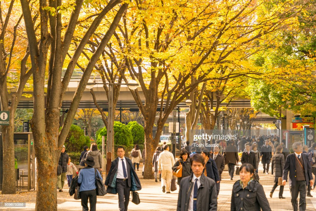 People walk through under the line of autumn leaves trees at Shinjuku Subcenter Nishi-Shinjuku, Tokyo Japan on November 24 2017. : Stock-Foto