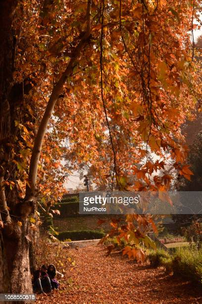 People walk under the Chinar trees which have change their colour in the Nishat Mughal garden during the autumn season on November 6 2018 in Srinagar...