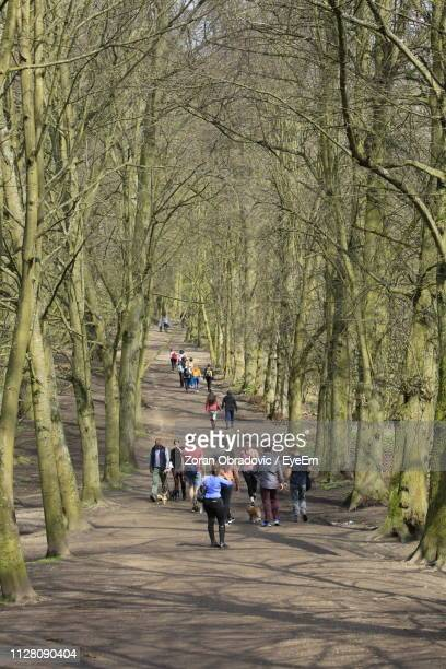 People Walking Amidst Bare Trees
