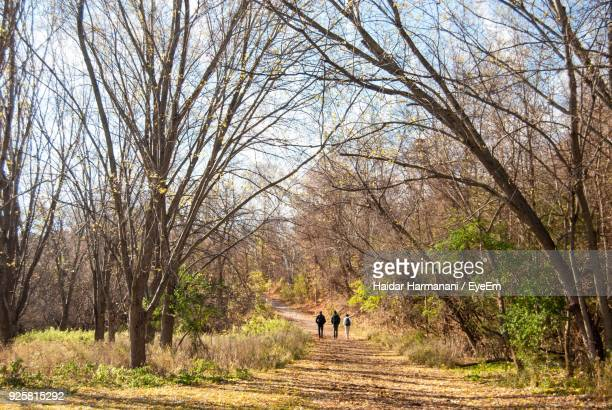 People Walking Amidst Trees In Forest