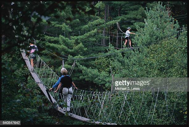 people walking among trees - eastern white pine stock pictures, royalty-free photos & images