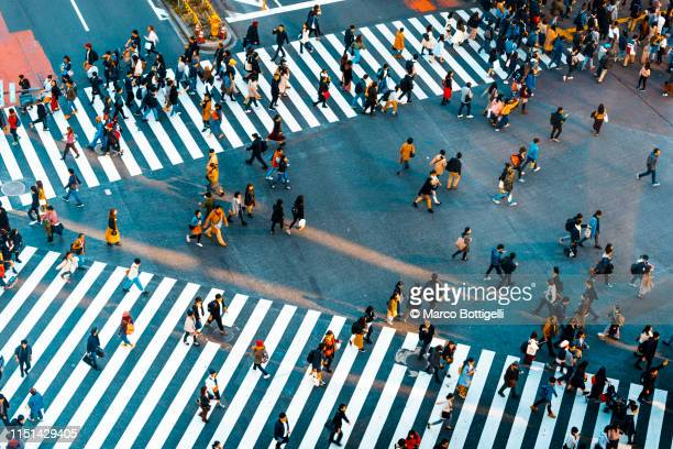 people walking at shibuya crossing, tokyo - overhead view of traffic on city street tokyo japan stock photos and pictures