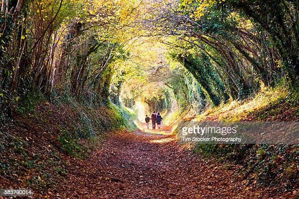 people walking down a tunnel of trees. - chichester stock pictures, royalty-free photos & images