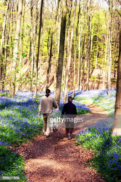 People walking in a blooming forest, Belgium