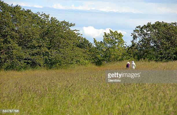 people walking in beacon hill park meadow - victoria monet stock photos and pictures