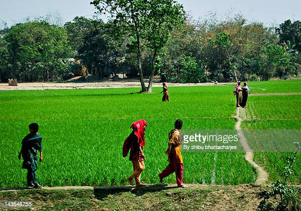 people walking in field - bangladeshi beautiful girl stock photos and pictures