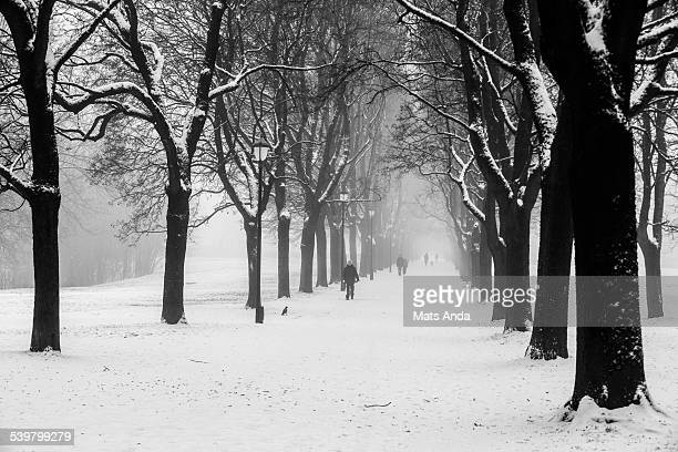 People walking in the park in snow and fog