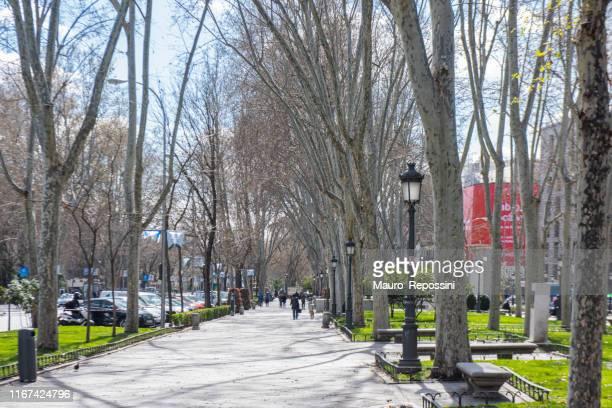 people walking in the paseo del prado at madrid city, spain. - el prado museum stock pictures, royalty-free photos & images