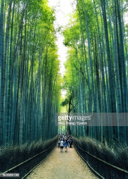 People Walking On Footpath Amidst Bamboo Grove In Forest