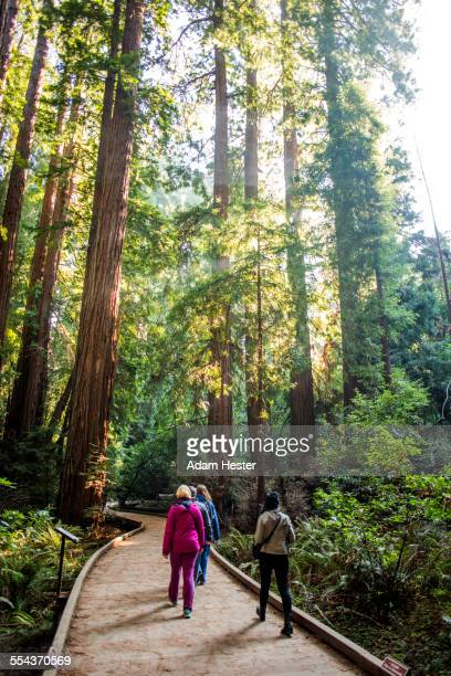 people walking on wooden path in forest - muir woods stock photos and pictures