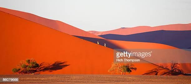 people walking up sand dune , sossusvlei , sesriem , namib desert , namibia - ナミブ砂漠 ストックフォトと画像