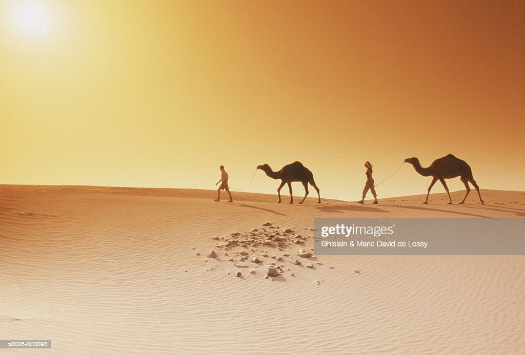 People Walking with Camels : Stock Photo