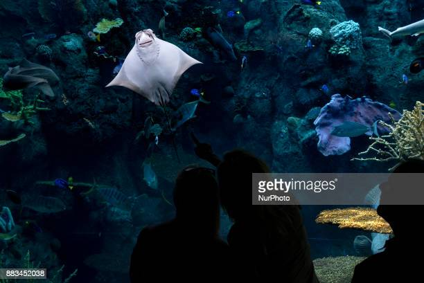 People watch a Cownose ray at the Aquarium of the Pacific in Long Beach California on November 30 2017The Aquarium of the Pacific is home to more...