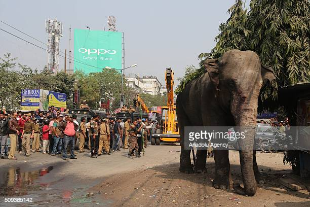People watch a wild elephant that strayed into the town after authorities shot it with a tranquilizer gun at Siliguri in West Bengal state India on...