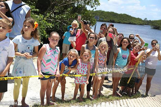 People watch as a a manatee waits to be released into the Loxahatchee River at the Jonathan Dickinson State Park boat ramp on June 21 2016 in Jupiter...
