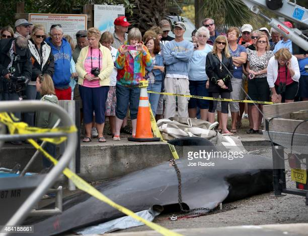 People watch as a dead pilot whale is prepared to be transported to a facility for a necropsy by the National Oceanic and Atmospheric...