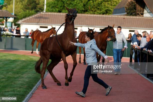 People watch as a handler drops the lead of a thoroughbred foal during the Yearlings sales one of the world renowned annual thoroughbred sales in...