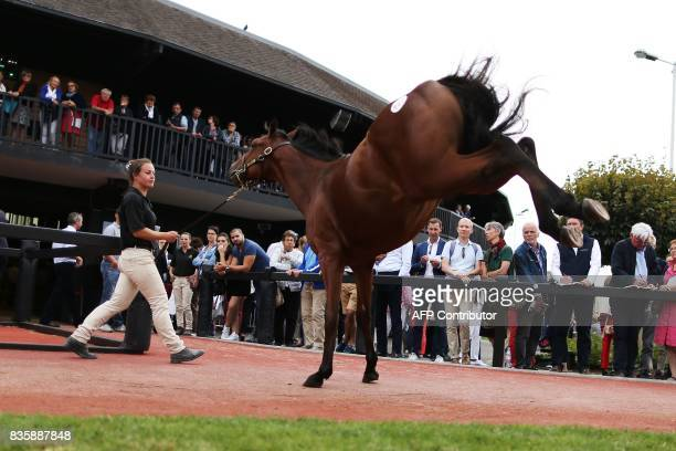 People watch as a handler walks a thoroughbred foal during the Yearlings sales one of the world renowned annual thoroughbred sales in Deauville on...