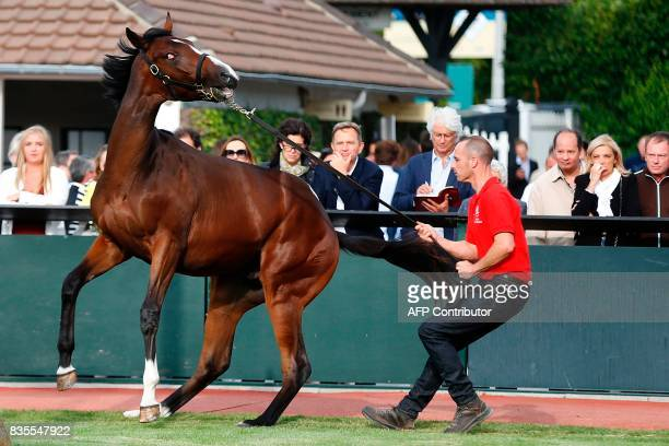 People watch as a stable hand controls a thoroughbred foal during the Yearlings sales one of the world renowned annual thoroughbred sales in...