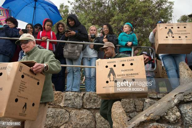 People watch as boxes containing African Penguins are brought to the beach before being released into the sea on October 8 in Simonstown about 30Km...