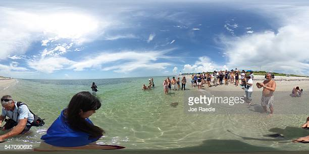 People watch as one of five rehabilitated juvenile green sea turtles are released into the Florida waters by Miami Seaquarium animal care personnel...