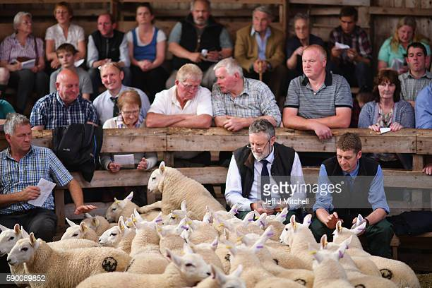 People watch as sheep farmers gather at Lairg auction for the great sale of lambs on August 16 2016 in Lairg Scotland Lairg market hosts the annual...