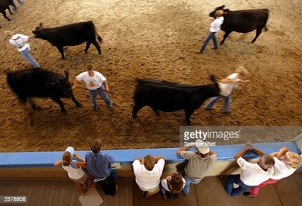 People watch as teens participate in a 4H Club cattle event on the first day of the 2003 Iowa State Fair August 7 2003 in Des Moines Iowa Thousands...