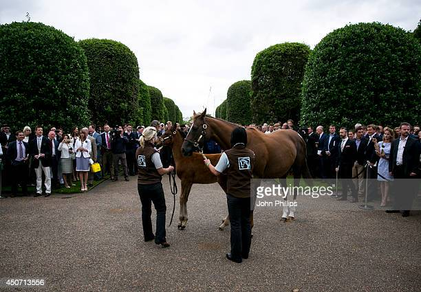 People watch as the unnamed threemonthold foal fathered by racehorse Frankel and Mother Crystal Gaze walk at The Orangery on June 16 2014 in London...