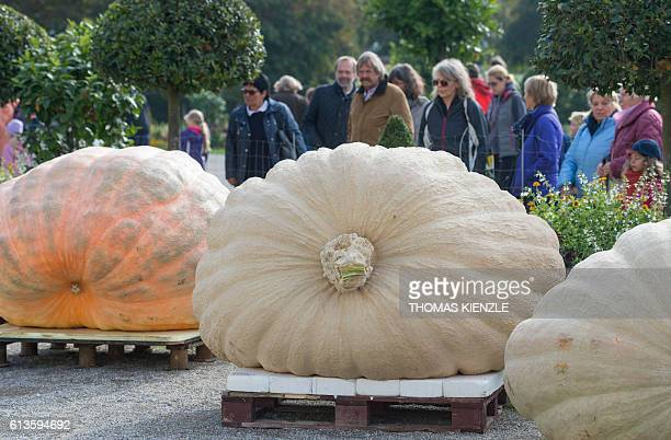 People watch giant pumpkins during the Giant Pumpkin European Championship in Ludwigsburg southwestern Germany on October 9 2016 / AFP / THOMAS...