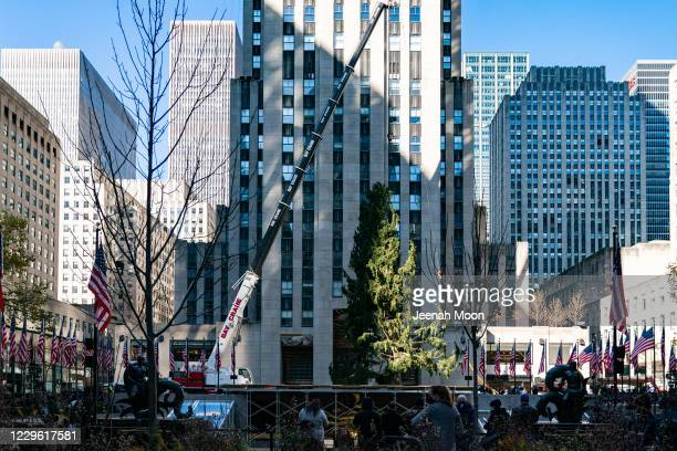 People watch the Rockefeller Center Christmas Tree on November 14, 2020 in New York City. The 75-foot-tall tree found at Daddy Al's General Store in...