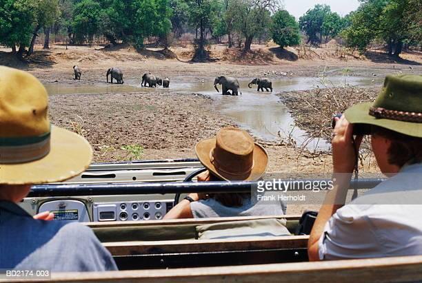 People watching African elephants (Loxodonta africana) crossing river