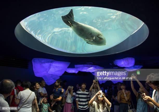 People watching harbor seals in Kaiyukan aquarium Kansai region Osaka Japan on August 19 2017 in Osaka Japan